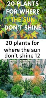plants best plants for shade shade plants