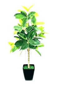 good houseplants for low light low light house plants best indoor plants low light tall low good houseplants for low light