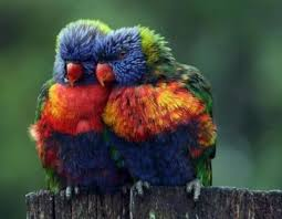 Image result for tie dye birds