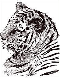 Dessin Colorier Gratuit F Lin Tigre Colorier Felin Et Gratuit