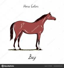Foal Color Chart Horse Color Chart On White Equine Bay Coat Color With Text