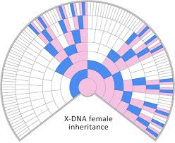 Blaine Bettinger Chart Family And Dna Ssgg Swedish Society For Genetic Genealogy