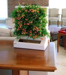 Small Picture indoor flowers Indoor Gardening Pinterest Indoor flowers