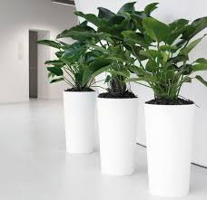best indoor plants for office. if you are interested in discovering best indoor plant hire melbourne then can choose an inscape plants for office