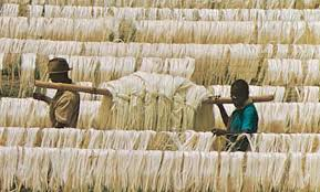 Image result for images of agriculture in Tanga region tanzania