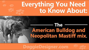 American Bulldog And Neopolitan Mastiff Mix An Expert Guide