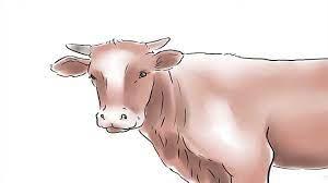 هل يجوز ان تكون اضحية عيد الاضحى من البقر - شروط الأضحية من البقر - YouTube
