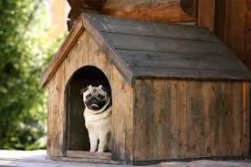 the best outdoor dog houses 2019 reviews