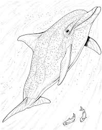 Dolphin Color Pages Marvelous Coloring Pages Draw A Dolphin Game