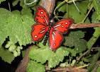 Как сделать бабочек для сада