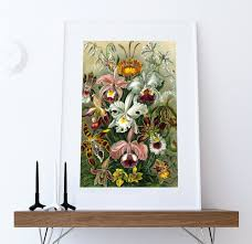 ernst haeckel orchidae print orchids art vintage nautical  on orchids wall art with ernst haeckel orchidae print orchids art vintage nautical decor
