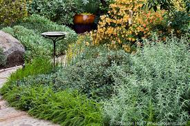 california native plant garden with mixed border using gray foliage perennials and flowering monkeyflower