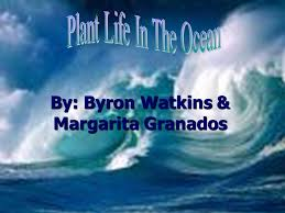 By: Byron Watkins & Margarita Granados. Vocabulary  Phytoplankton-microscopic plants. Nitrogen-a nonmetallic element that is  normally a colorless odorless. - ppt download