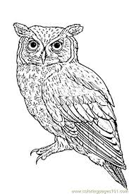Realistic Owl Coloring Pages At Getdrawingscom Free For Personal