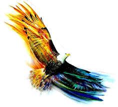 Image result for soaring eagle
