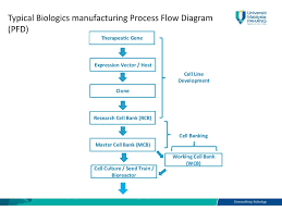 Biopharmaceutical Manufacturing Process Flow Chart Bsb Biomanufacturing Chapter 3 Biomanufacturing Processes