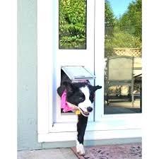endura pet door dog door hale dog door replacement flaps endura flap pet door reviews