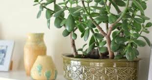 Feng shui home elements plants Bedroom Feng Shui Says this Plant At Right Place Is Key To Brings Good Luck Prosperity Mydomaine Feng Shui Says this Plant At Right Place Is Key To Brings Good