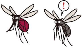 ブヨ 蚊 違い