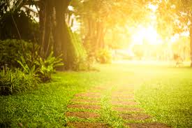 Image result for free sunlight pictures