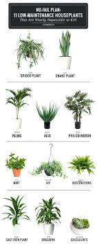 plants for office cubicle. 11 Easy To Grow Houseplants Good Office Cubicle Plants Best Indoor Australia For E