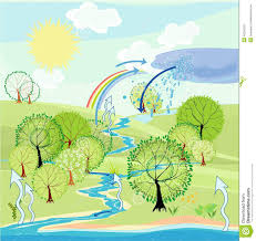 Water Cycle Stock Vector Illustration Of Chart Hill 46216252