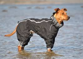 Hurtta Downpour Suit
