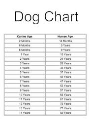 Puppy Age Chart Age Chart For Dogs By Estelle Dogs Dogs Puppies Dog