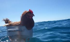 life of pi chicken edition ur life of pi chicken edition