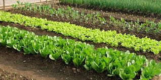 an introduction to vegetable gardening