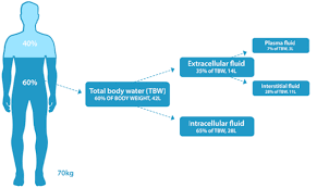Water And Hydration Physiological Basis In Adults