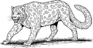 Leopard Pictures To Color Baby Leopard Coloring Pictures