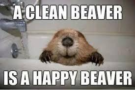 FunniestMemes.com - Funny Memes - [A Clean Beaver Is A Happy Beaver] via Relatably.com