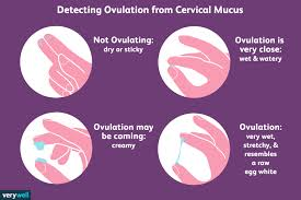 Ovulation Chart Pregnancy Signs How To Check Your Cervical Mucus And Detect Ovulation