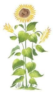 tall sunflower wall stencil sku 2083