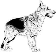Dog Breed Coloring Pages Coloringpages321 Com