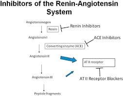 Renin Inhibitors An Overview Sciencedirect Topics