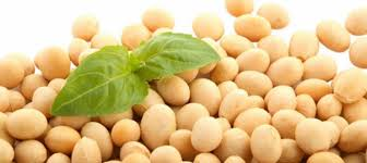 Hasil gambar untuk kacang kedelai