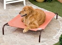 outdoor coolaroo dog bed with cot beds for dogs also hammock pet bed