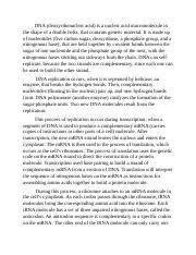 Dna Essay 03 05 Notes Assignment Docx 3 05 Dna Replication Dna Essay