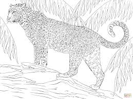 rainforest animals coloring pages free printable pictures new