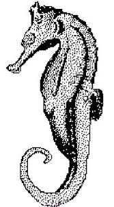 1001 Kleurplaten Dieren Allerlei Kleurplaat Zeepaardje