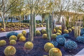pachycereus marginatus mexican fence post cactus with echinocactus grusonii golden barrel cactus and agave sunnylands garden southern california