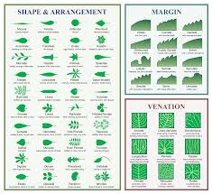 Ohio Leaf Identification Chart Identification Of Trees Of The Northeastern United States