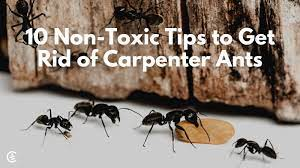 get rid of carpenter ants naturally