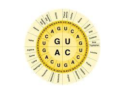 Amino Acid Chart Science Showme