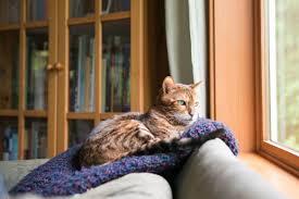 Gekippte Fenster Sichern Katzen Gekipptes Fenster Elegant Falsches