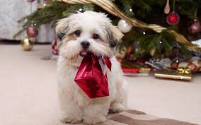 You can experience the version. Cute Christmas Dog S Wallpaper Animals Wallpaper Better