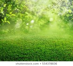 Grass background Texture Spring Grass Background Shutterstock Green Grass Background Texture Images Stock Photos Vectors