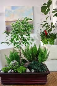 9 reasons to combine houseplants